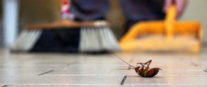 Pest Control San Antonio TX
